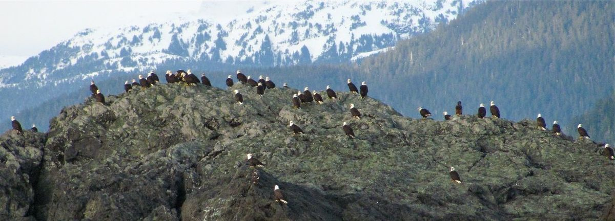 Eagle Rock Alaska At Rest Birds Eagles Flock Rock Rocky Beach Snow Tongass Wild Wildlife