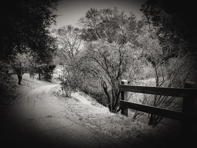 """""""Winter Path"""" A suburban path to escape the stress, does it lift me feeling less? I walk the trail along bare branch border, nature seems so void of order, but still I walk, a daily task, for health for clarity may it last. Poetry In Pictures Poetry Blackandwhite Photography Black And White Blackandwhite Trail Pathway Path No People Day Nature Outdoors Vignette Railing"""