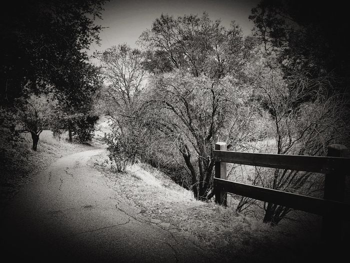 """Winter Path"" A suburban path to escape the stress, does it lift me feeling less? I walk the trail along bare branch border, nature seems so void of order, but still I walk, a daily task, for health for clarity may it last. Poetry In Pictures Poetry Blackandwhite Photography Black And White Blackandwhite Trail Pathway Path No People Day Nature Outdoors Vignette Railing"