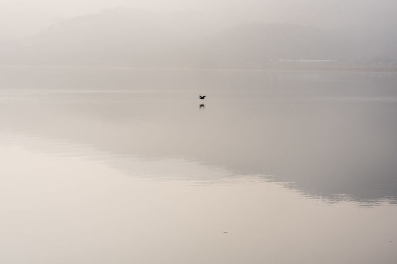 Animal Themes Animal Wildlife Animals In The Wild Beauty In Nature Bird Day Flying Korea Lake Nature No People One Animal Outdoors Reflection Scenics Sky Sunset Tranquility Water