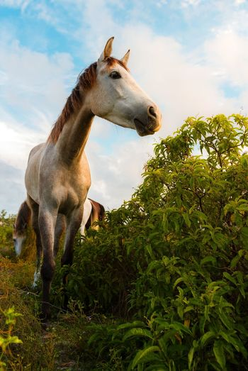 🐎munch from dusk till dawn🐴~ Outdoors Mammal Day Animal Wildlife Animal Themes Horse Hiscreation Nature Beauty In Nature Grandturk Paradise Turksandcaicos Travel Destinations Summer Vacations