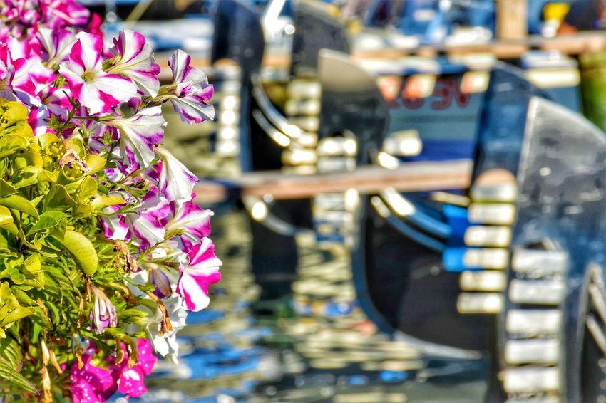 Gondola - Traditional Boat Streetphotography Gondola Gondole In Venice Venice Summer Boat Flower City Close-up