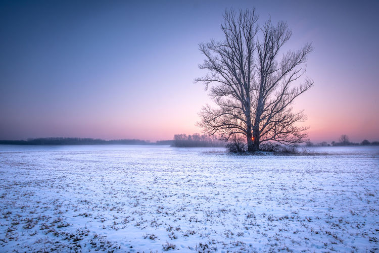 Leafless Tree White Color White Cold Dawn Sun Sunrise Morning Tree Copy Space Meadow Field Snow Frozen No People Nature Tranquil Scene Tranquility Beauty In Nature Scenics - Nature Winter Cold Temperature Sky Landscape Environment