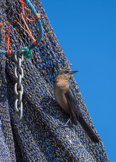 Low angle view of a bird against blue sky
