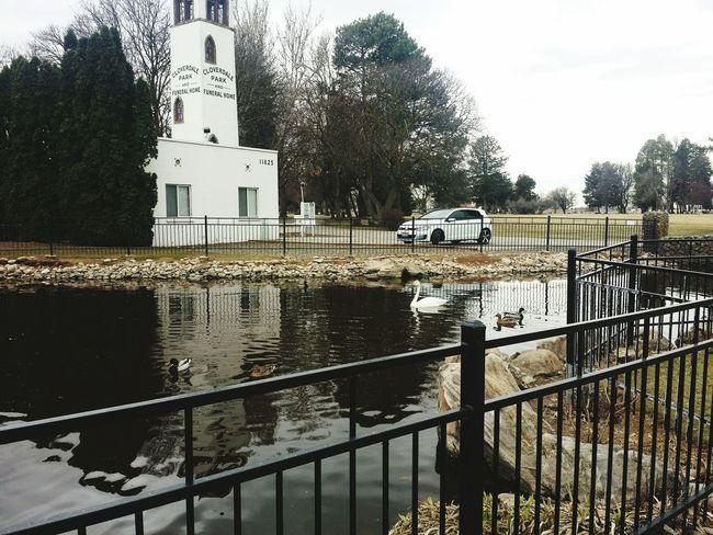 EyeEm Best Shots - Landscape Water Boiseidaho Ponds Acrossthewater Car Shots VW GTI Swan