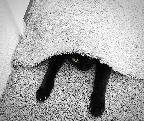 """I Am Hidden...I Think..."" Cats Cat Cat♡ Cat Lovers Cats Of EyeEm Catsagram Cats 🐱 Catsoftheworld Cats Eyes Blackandwhite Photography BLackCat Blackcats Blackcatsrule Selective Color"