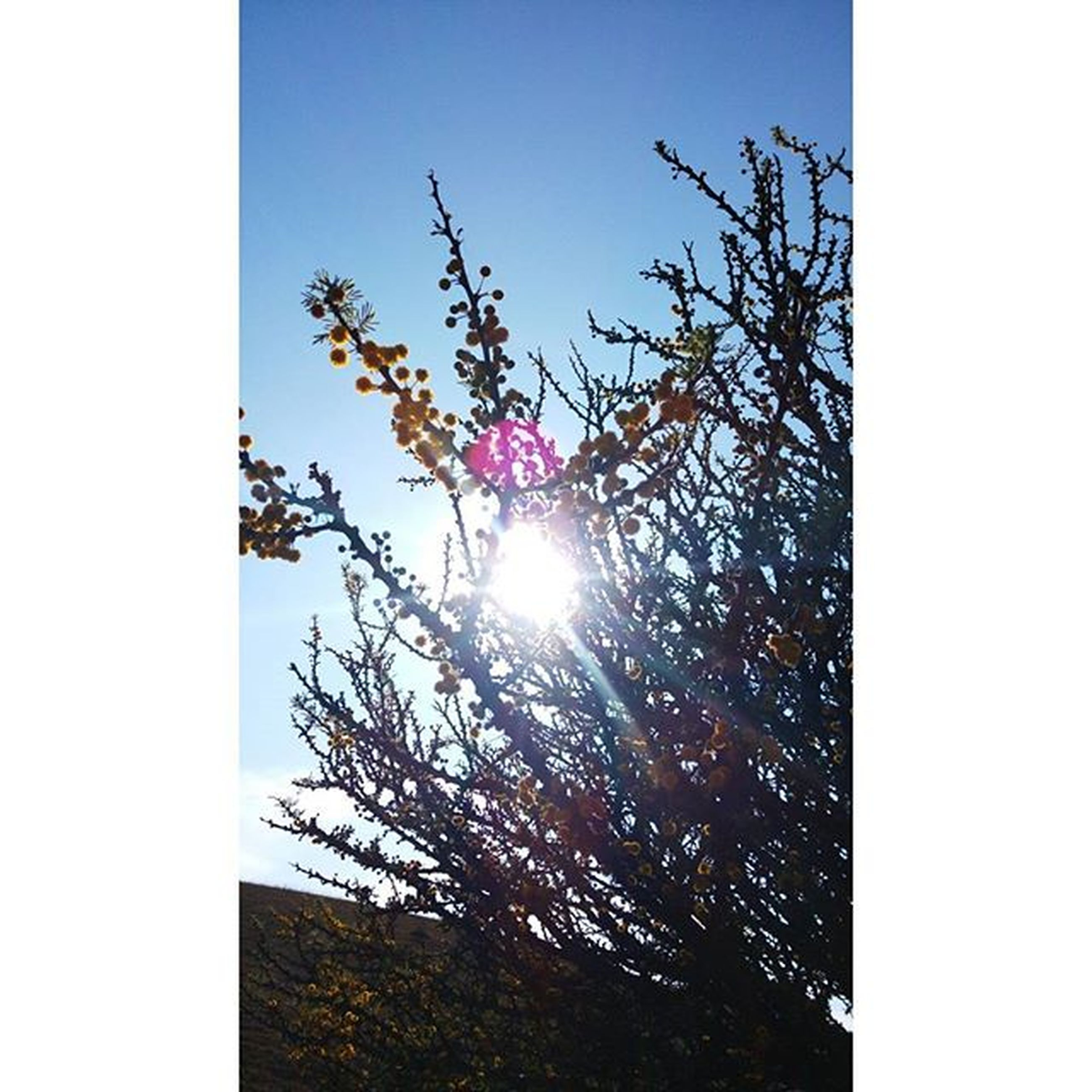 sun, transfer print, low angle view, clear sky, tree, sunbeam, sunlight, auto post production filter, lens flare, silhouette, branch, growth, sky, nature, beauty in nature, no people, outdoors, bare tree, bright, back lit