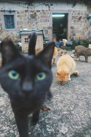 Cat BLackCat Curiosity Curious Animals