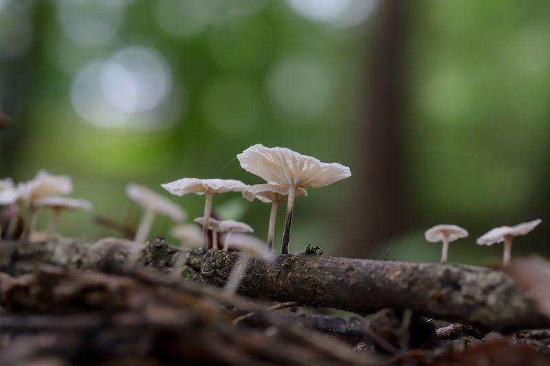 Mushrooms are
