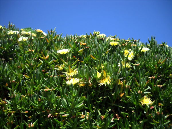 2012 Beauty In Nature Clear Sky Close-up Day Fat Plants Green Color Growth Ischia Island Lacco Ameno Nature No People Outdoors Plant