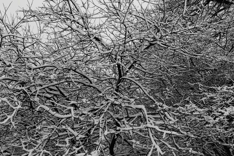 Black & White Bws_landscape Snow BWTree