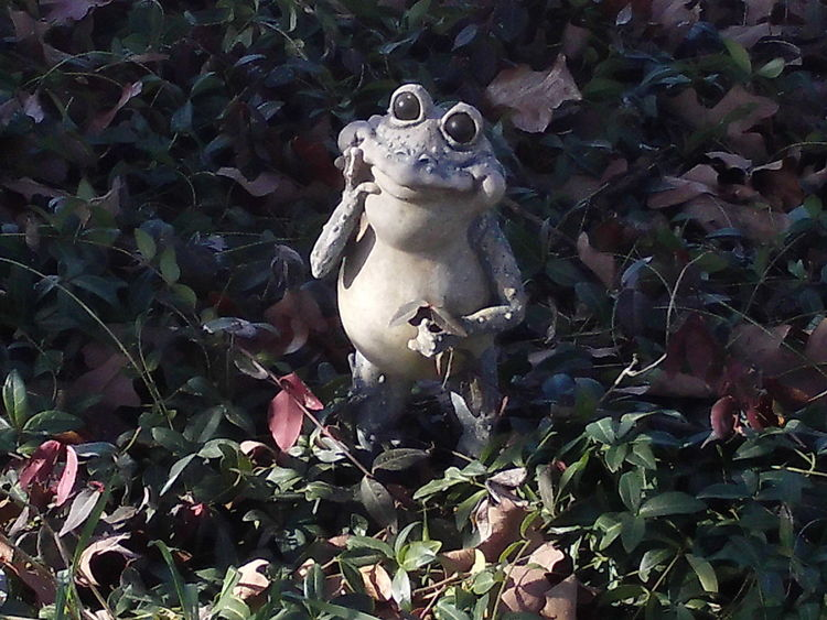 Backgrounds Blindshot Close-up Curiosity Frog Full Frame Groundcover Growth No People Relaxation Relaxing Yard Ornamounts