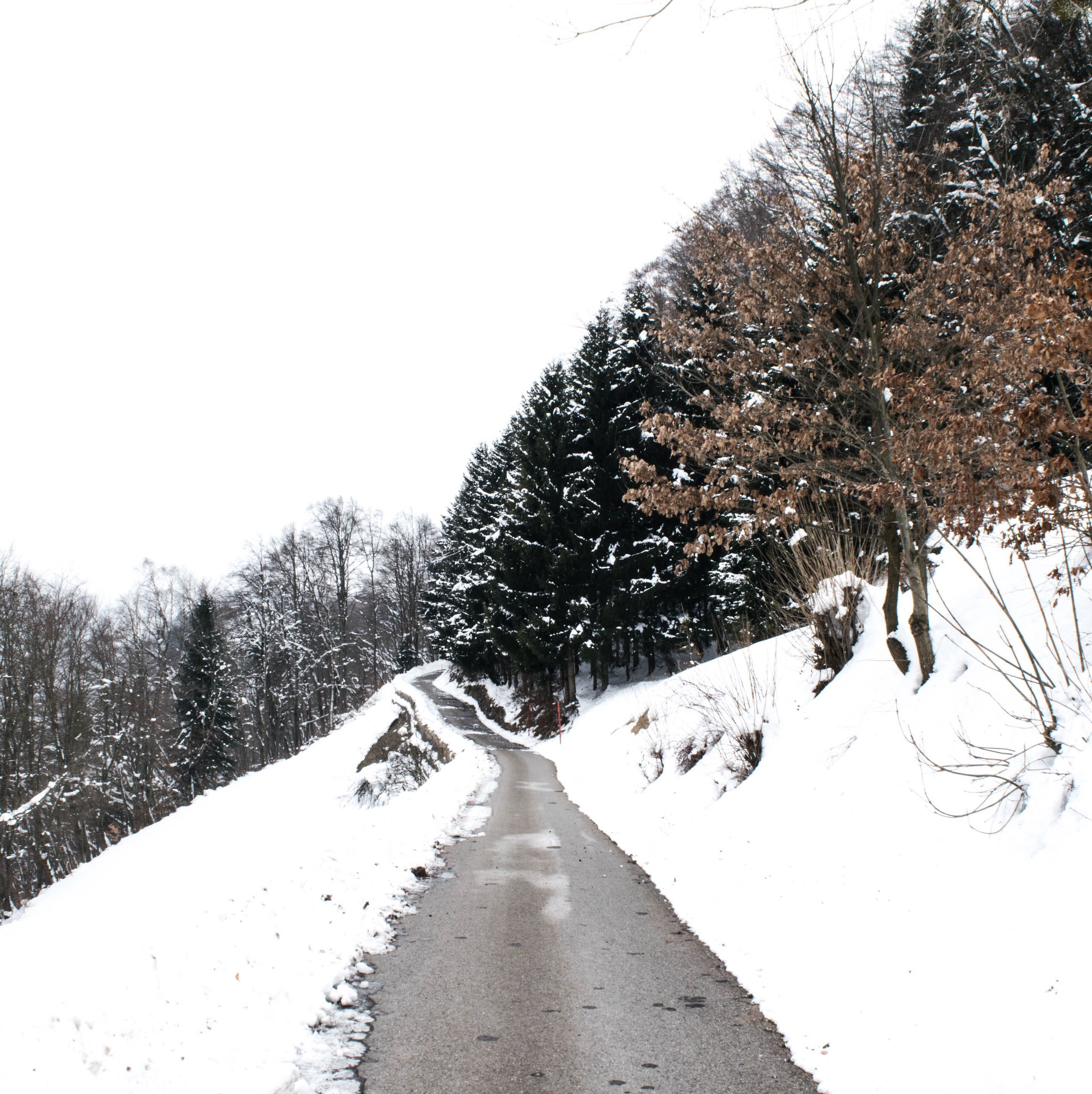 snow, winter, the way forward, cold temperature, season, diminishing perspective, weather, clear sky, vanishing point, tree, covering, nature, road, tranquility, transportation, tranquil scene, bare tree, covered, beauty in nature, day