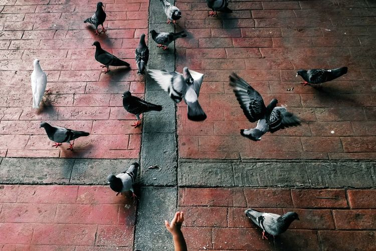 Pigeons on wall