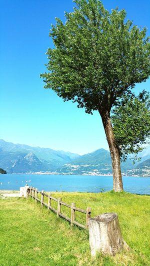 Tree growing on grassy field against lake