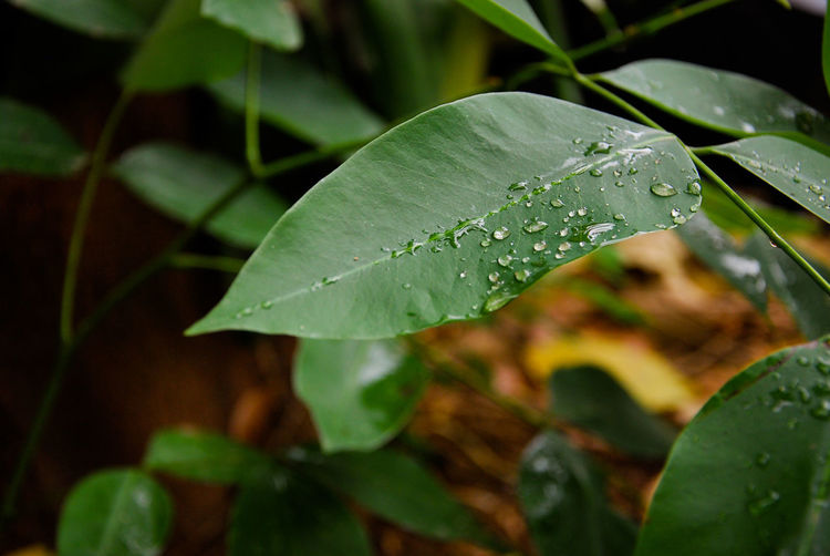 fresh water drop on the leaf Pattern White Green Background Beautiful Lifestyles Light Art Abstract Color Leaf Drop Nature Water Green Color Close-up Plant No People Wet Beauty In Nature Freshness Day Fragility Outdoors