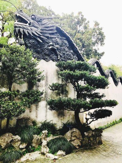 Mandarin Yu