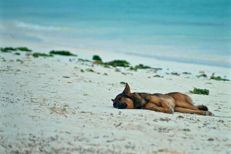 A local chilling on the east coast of zanzibar Animal Beach Beachphotography Chilling Dog Eastcoast Local Ocean Rest Water Zanzibar Zanzibar_Tanzania Zanzibarisland