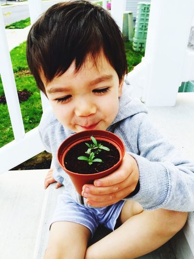 Happy Boy Holding Small Potted Plant On Chair At Lawn