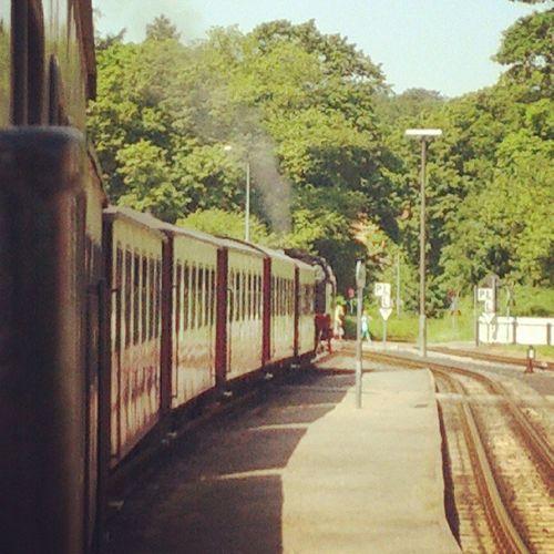 'Molli' the train. Max velocity: 40km/h