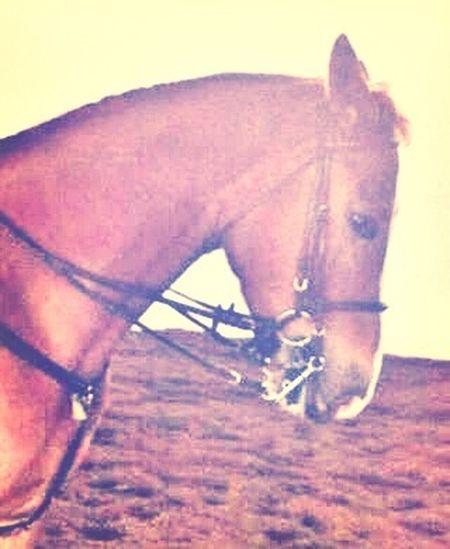 L'équitation Plus Qu'une Passion Rox ❤️
