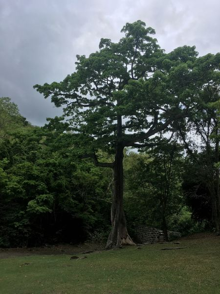 Dominica Beauty In Nature Branch Day Forest Grass Green Color Growth Landscape Nature No People Outdoors Scenics Sky Tranquil Scene Tranquility Tree
