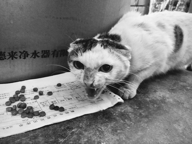 Hi! Pets Animals Check This Out Taking Photos Cats Of EyeEm Cat Annimals Angery