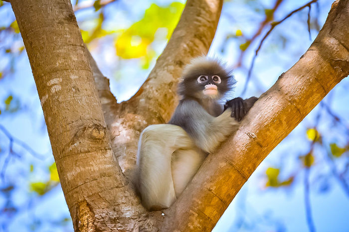 Animal Wildlife Animal Mammal Animals In The Wild Tree Branch Monkey Cute Portrait Nature Looking At Camera Climbing Lemur One Animal Outdoors Day Animal Themes Ape