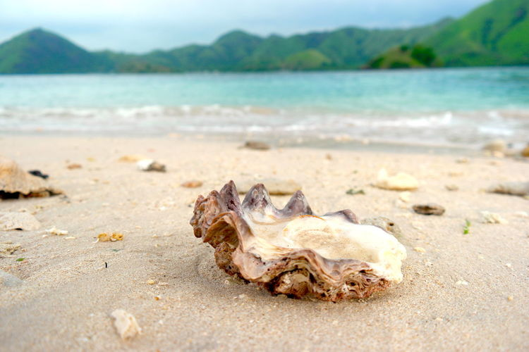 Beach Land Sea Sand Animal Water Animal Wildlife Bone  Day Nature No People Animal Themes Beauty In Nature Sea Life Animals In The Wild Focus On Foreground Tranquility Marine Outdoors Surface Level Conch Shell Clam Oyster  Barfuss Um Die Welt