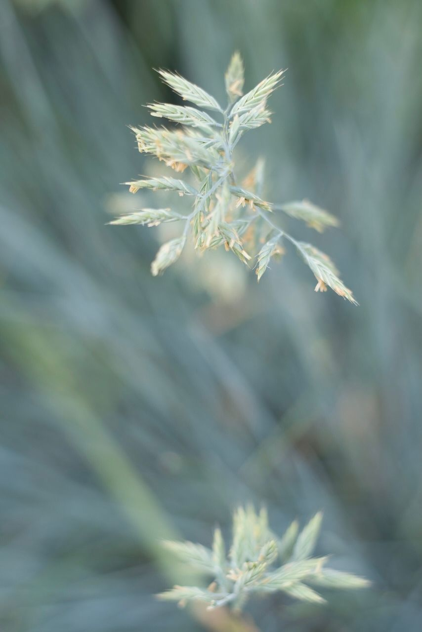 plant, growth, beauty in nature, fragility, close-up, vulnerability, nature, no people, flower, flowering plant, day, focus on foreground, tranquility, selective focus, freshness, outdoors, leaf, plant part, white color, plant stem, flower head