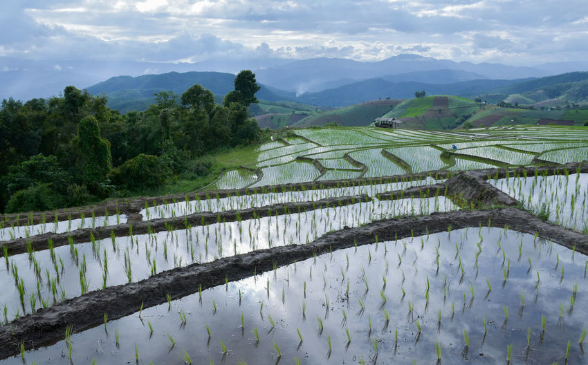 Agriculture Beauty In Nature Cultivated Land Day Farm Field Growth Landscape Mountain Mountain Range Nature No People Outdoors Rice - Cereal Plant Rice Paddy Rural Scene Scenics Sky Tranquil Scene Tree Water