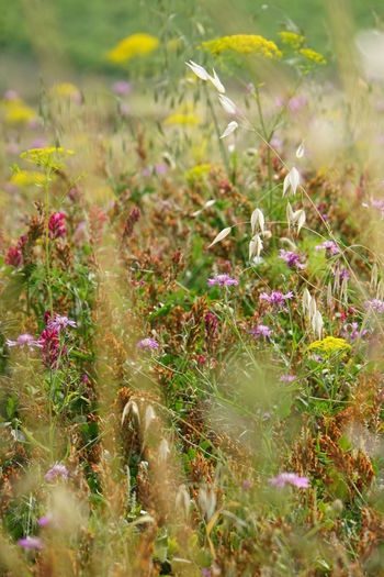 Beauty In Nature Blurred Foreground Close-up Of Field No People No Photoshop Outdoors Selective Focus Sicilyphotography Sony A6000 Wild Flowers And Grasses