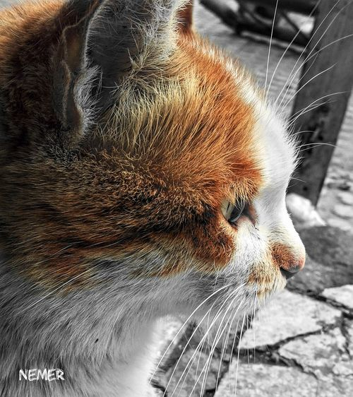 Jordan Amman First Eyeem Photo Nautre Relaxing Downtown Orange Black And Orange Orange Color Orangeisthenewblack White Cat Cat LoversCat♡ CATTY Catty Eyes Cattycat Cats Of EyeEm Cats 🐱 Cat Photography Calm