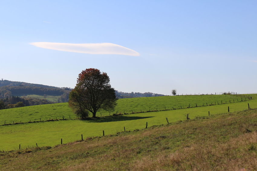 typical german landscape Beauty In Nature Blue Countryside Day Field Grass Grassy Green Color Growth Hill Horizon Over Land Idyllic Landscape Mountain Nature No People Non-urban Scene Outdoors Remote Rural Scene Scenics Sky Tranquil Scene Tranquility Tree
