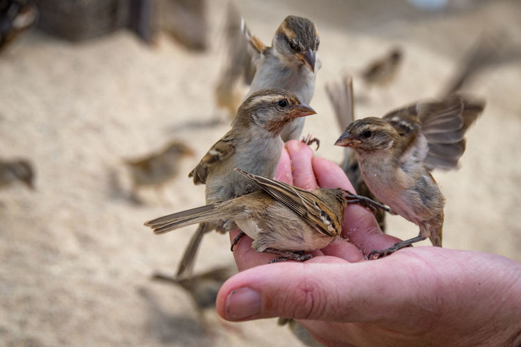 Animal Themes Animal Wildlife Animals In The Wild Bird Close-up Day Domestic Animals Feeding  Focus On Foreground Food Holding Human Body Part Human Finger Human Hand Mammal Nature One Animal One Person Outdoors Real People Unrecognizable Person Young Animal Young Bird