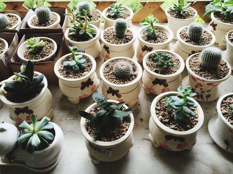 Herbvillage Tiny Flowerpot Fleshyplants