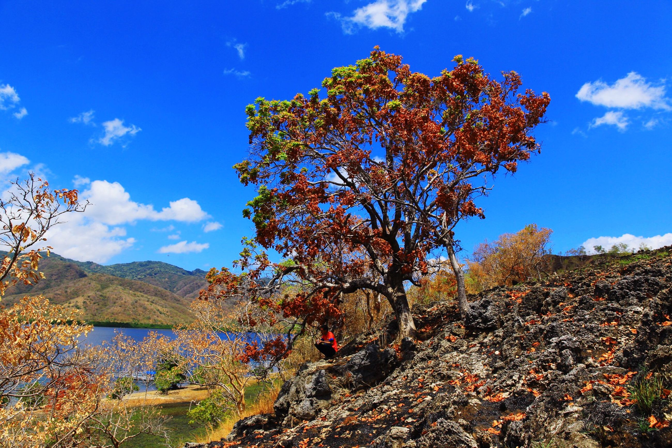 tree, sky, tranquility, tranquil scene, beauty in nature, blue, scenics, mountain, nature, landscape, sunlight, growth, cloud, cloud - sky, non-urban scene, idyllic, day, autumn, no people, branch