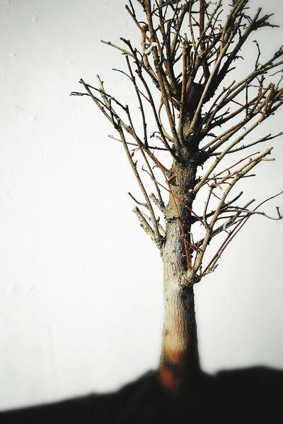 Tree Colors Popular Black And White Macro Nostalgia Otoño Arbol. The EyeEm Collection Fine Art Photography