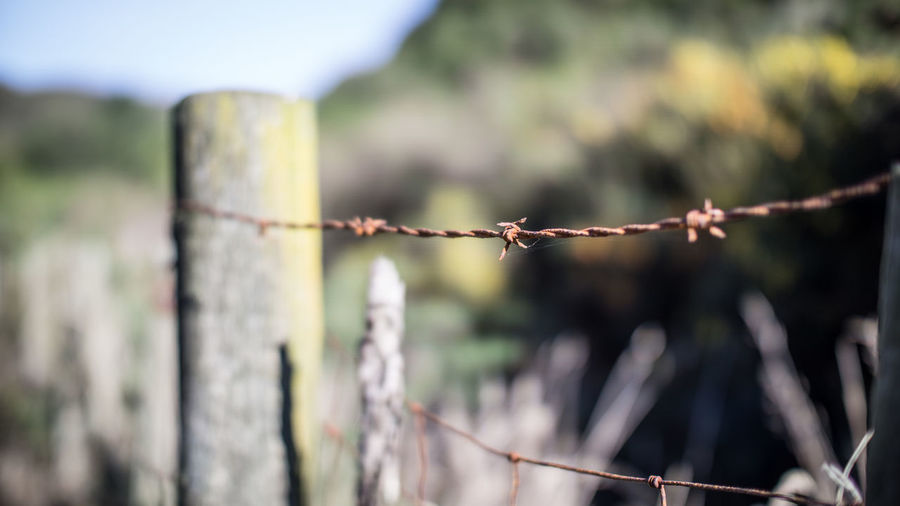 Barbed Wire Barbed Wire Close-up Day Fencepost Focus On Foreground Metal Nature No People Outdoors Protection Rural Safety Shallow Depth Of Field Sky