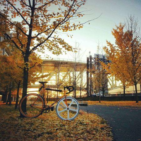 Sunrise Bike Trees Leaves Winter Bicycle Fixie Mercier Aerospoke Kilo Tt I Know A Place