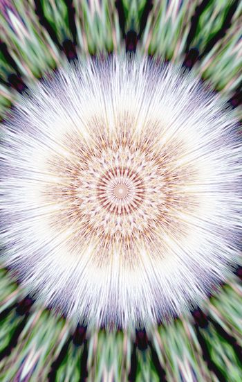 Dandelion Seed Flower Head Flower Fragility Plant Beauty In Nature Close-up Kolidescope Kolidescope Editing Wildflower Snowflake Extreme Edit Holiday Dandelion Dandylion Shapes And Design Edits And Filters Christmas Time Art Star Shape Star Creativity Cross Outdoors Nature