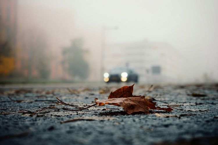 Close-up of dry leaf on street during autumn