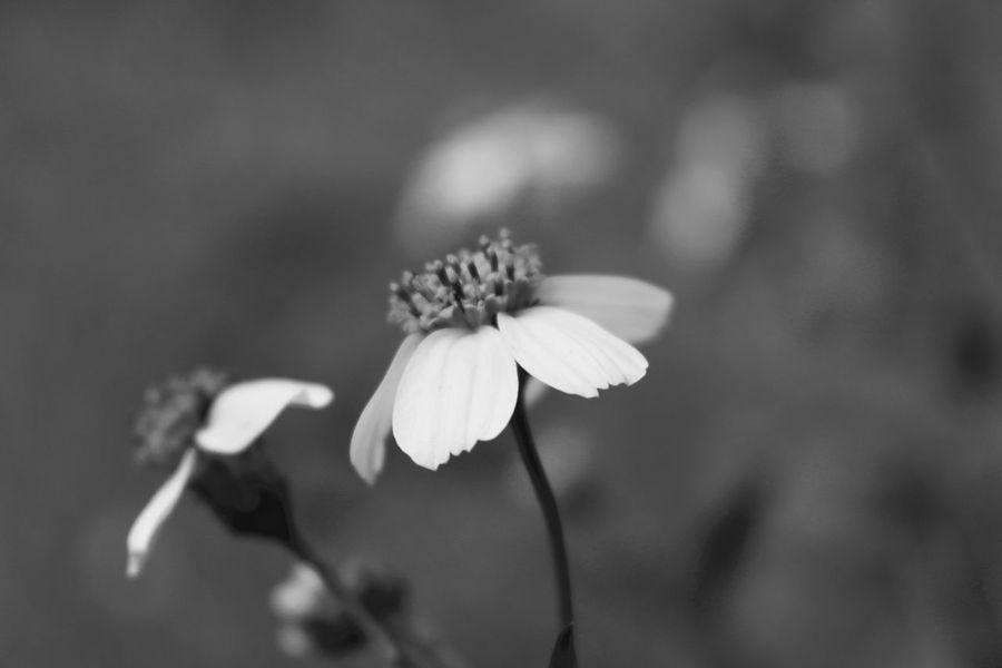 Blackandwhite Photography Enjoying Life Flowers
