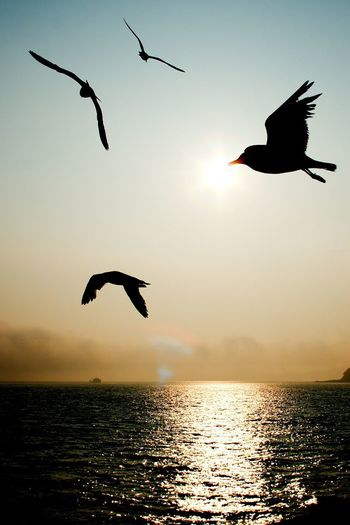 Bird Flying Sunset Animals In The Wild Animal Themes Spread Wings Silhouette Nature Mid-air Beauty In Nature Animal Wildlife Sea Water No People Outdoors Tranquility Scenics Sky Sunlight Horizon Over Water Thank You,❤️ I Always Thinking About U, G I Want To Know Your Secret, C The Great Outdoors - 2017 EyeEm Awards