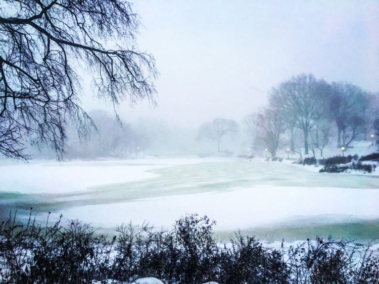 Central Park during Storm Jonas 2016 Winterstormjonas Jonas NYC Central Park Blizzard2016 First Eyeem Photo