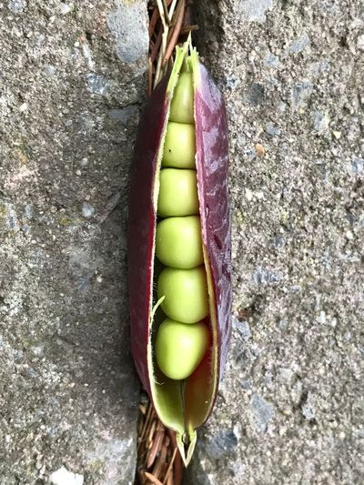 Marrow Marrow-vegetable Capucijners Close-up Healthy Eating Freshness Brienenoordeiland