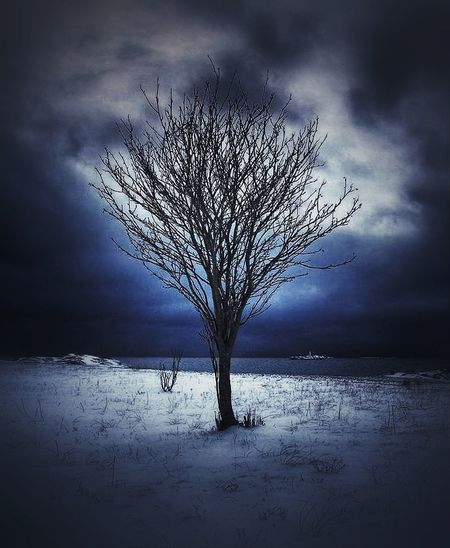 #tree #winter