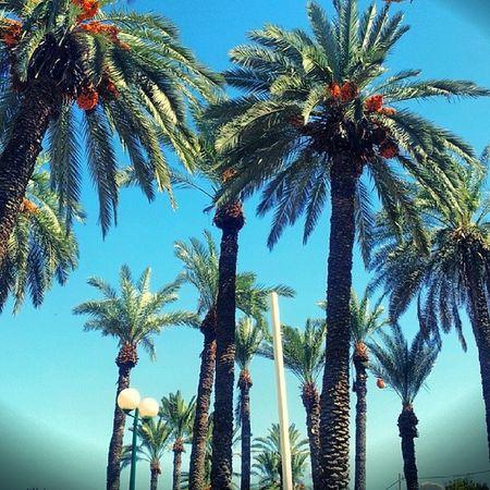 Tybirias Israel Fun Love Palm Tree Sun Relax Breath Hollyland Kineret Sea of galilie Jordan river Come Soon Travelingram