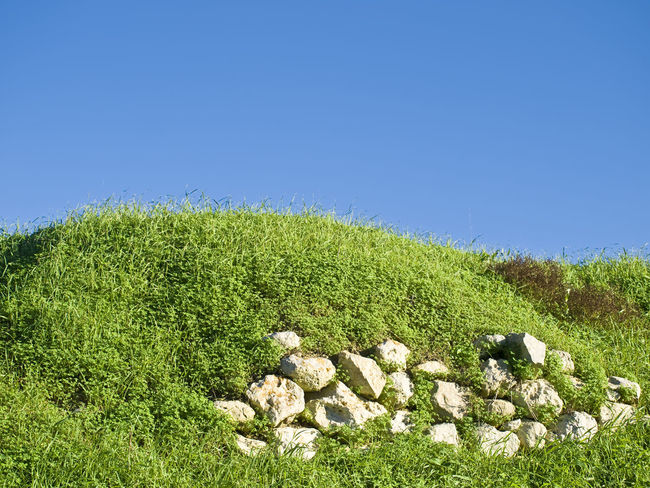 Rubble Wall Rubble Wall Agriculture Beauty In Nature Blue Clear Sky Day Field Grass Green Color Growth Landscape Nature No People Outdoors Plant Rural Scene Sky Summer Tranquility Tree