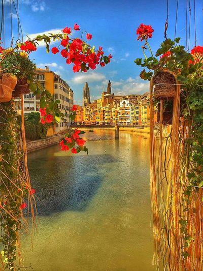 Sense paraules.. Gironamenamora Girona Temps De Flors 2016 Girona
